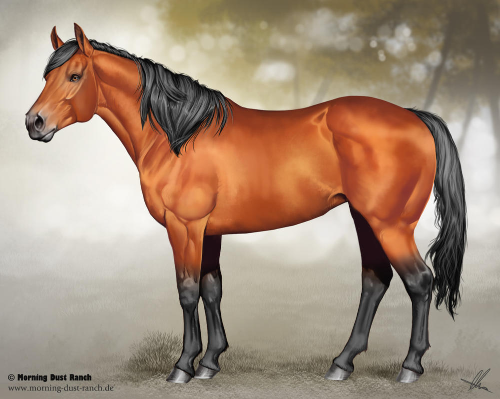 Quarter horse drawing - photo#27