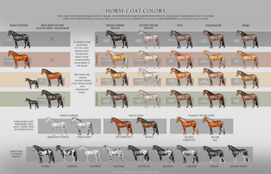 Horse Coat Colors - updated by AonikaArt