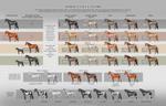 Horse Coat Colors - updated