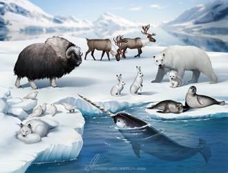 Arctic habitat
