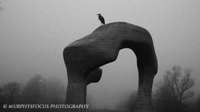 Heron by JanMurphyPhoto