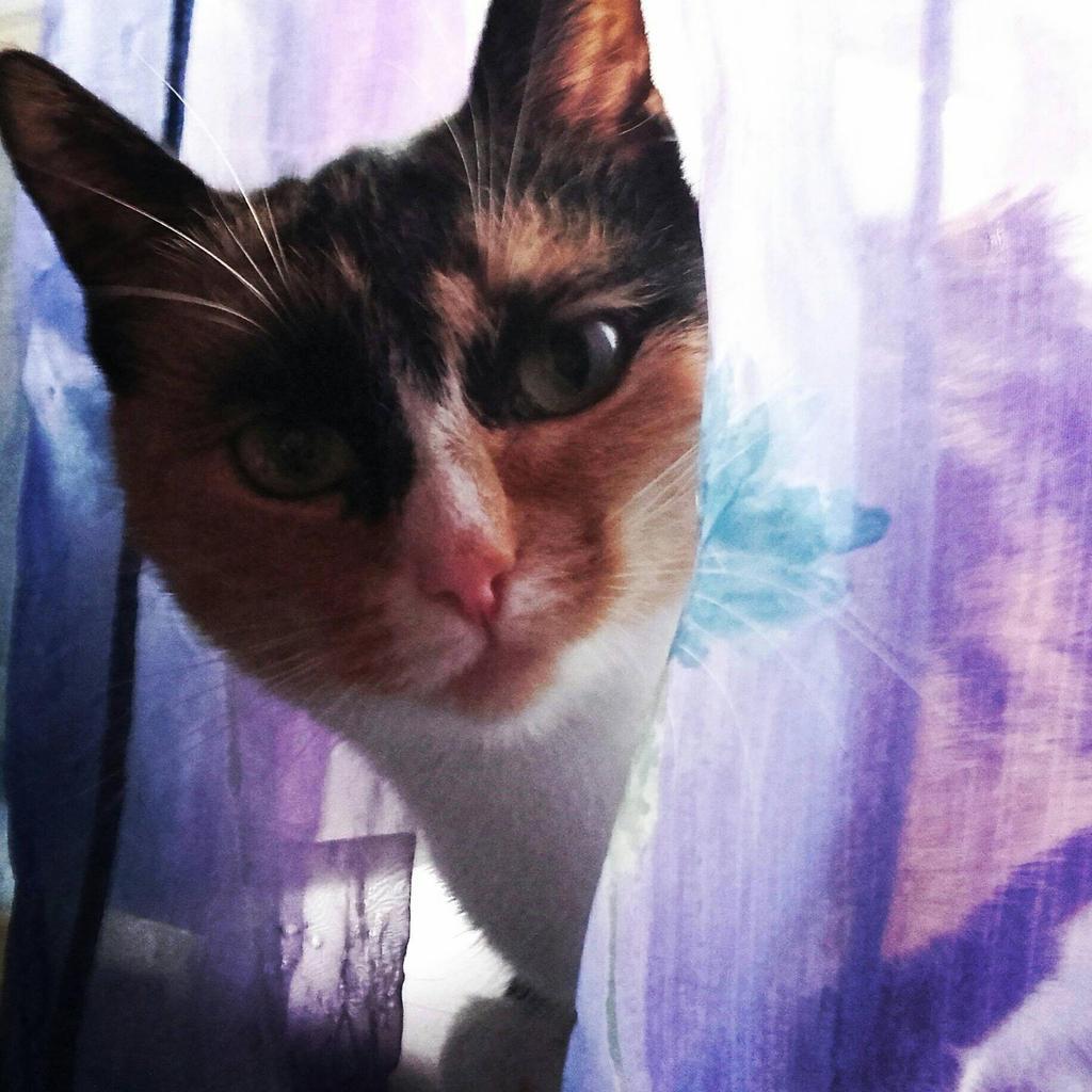 my cat UwU by LilSimona