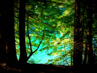 El bosque no deja ver el lago by Ernesto1971