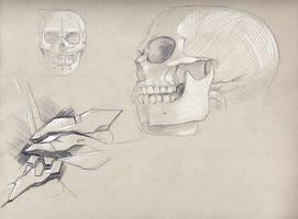 Skulls by aquadrop