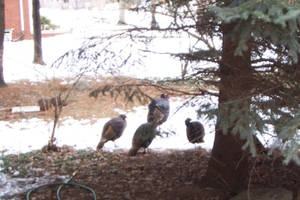 The Return of the Gobblers by LittleHouseCrafting