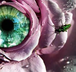 Eye of the rose.