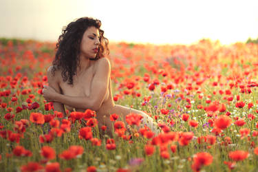 Bed of Poppies by MarcoFiorilli