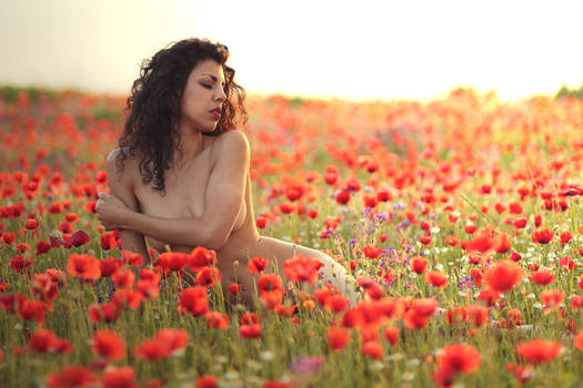 Bed of Poppies