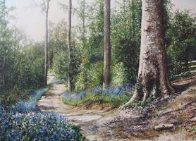 Blue bell forest by jamesgreen