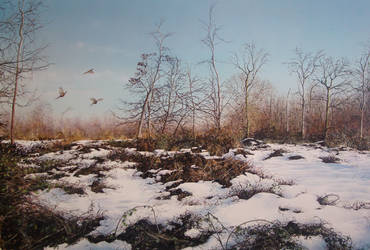 Castor hanglands