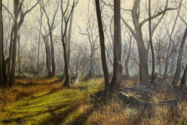 Stag in forest by jamesgreen