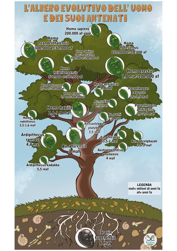 Evolution Tree by ElioFinocchiaro on DeviantArt