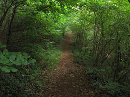 Path through the woods by Rylius