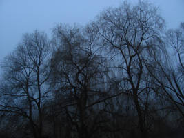 Trees by Rylius