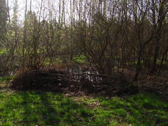 Swamp by Rylius