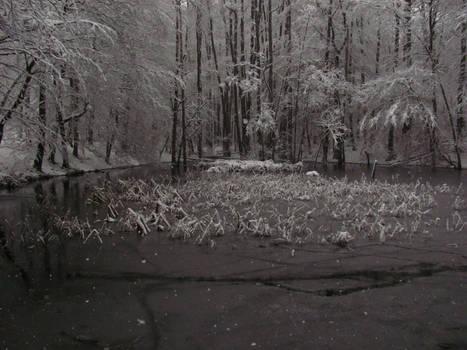 Freezing Pond