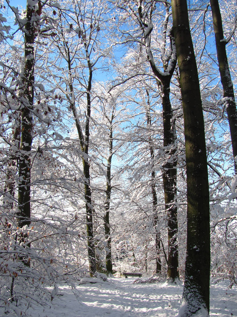 Frozen Trees by Rylius