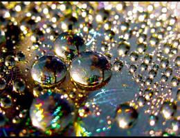 Jewels in the sun