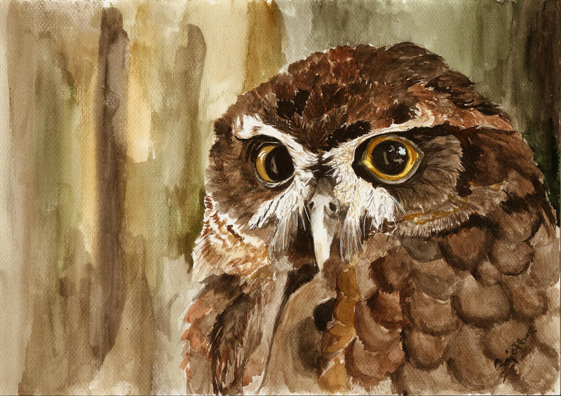 Owl 3 by SajoPhoe