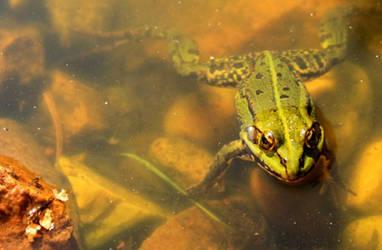 croak by froggina