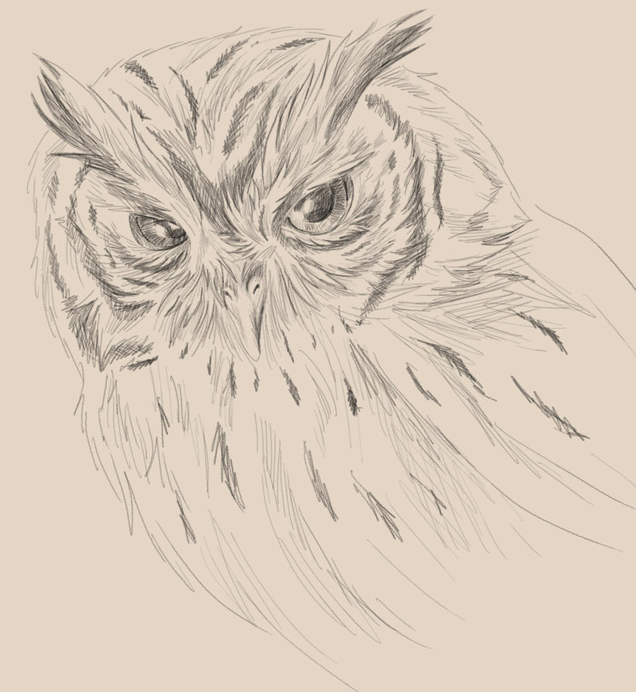 Tyto nigrobrunnea Taliabu MaskedOwl  Avibase