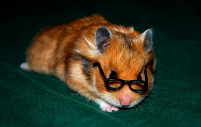 hamster with glasses by alice747