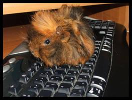 guinea pig by nati88