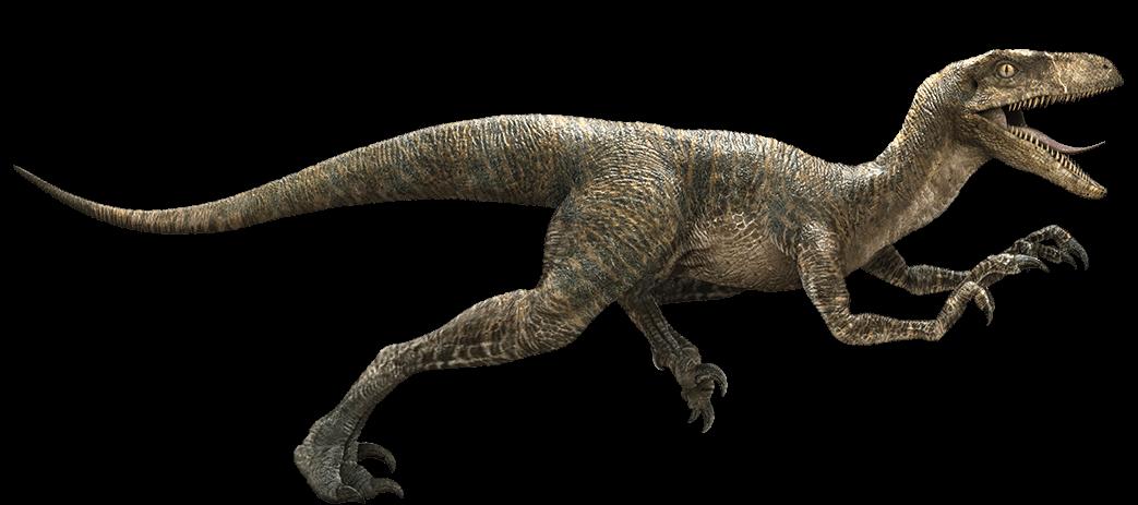 Jurassic World Velociraptor by Sideswipe217 on DeviantArt