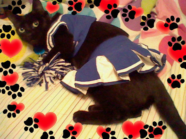 cheerleading_cat_d_by_s_c4ever.jpg