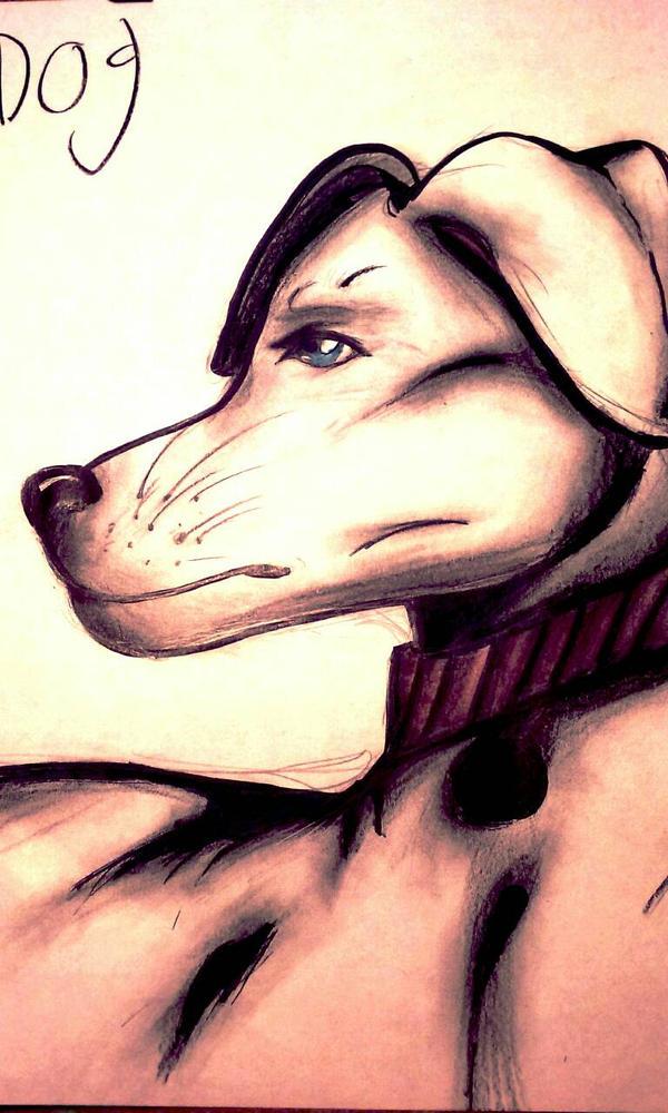 brightly colored dog by ponyland777