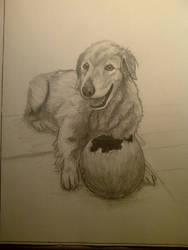 Shadow the Dog by Sidewinder52