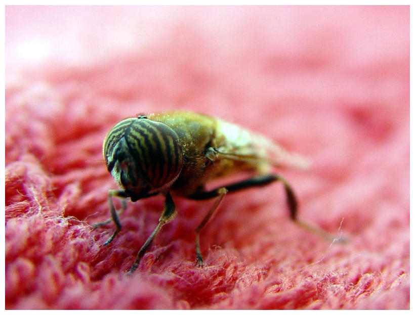 Insect eye to eye by saddogeyes