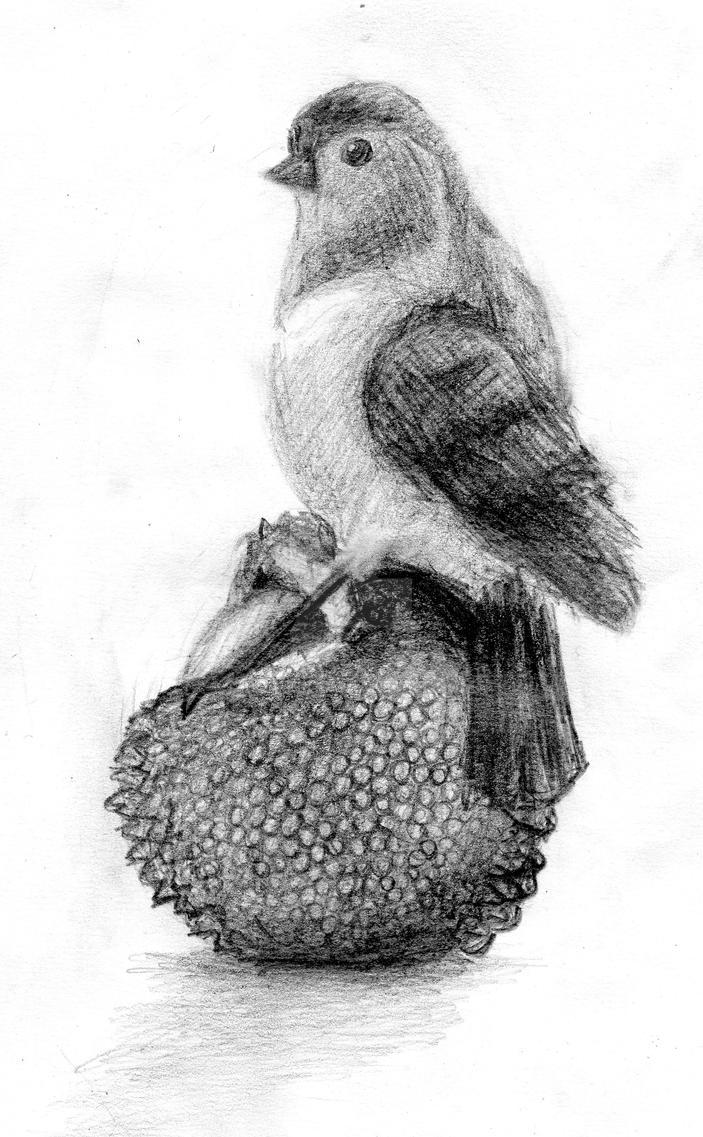 My First Pencil Drawing Bird By Borusk On DeviantArt