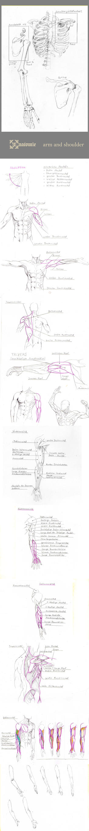 Arm Anatomie Stock by Eye-X-catcher on DeviantArt