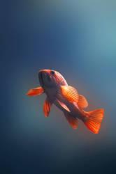 fish 11 by oxygun
