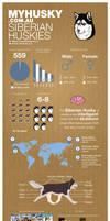 Husky Infographic by dridgett