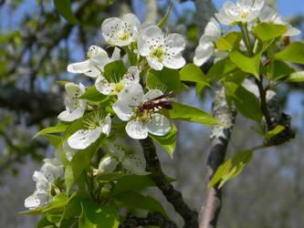 Bizzy Wasp by ljaggard