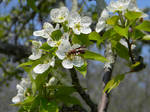 Bizzy Wasp
