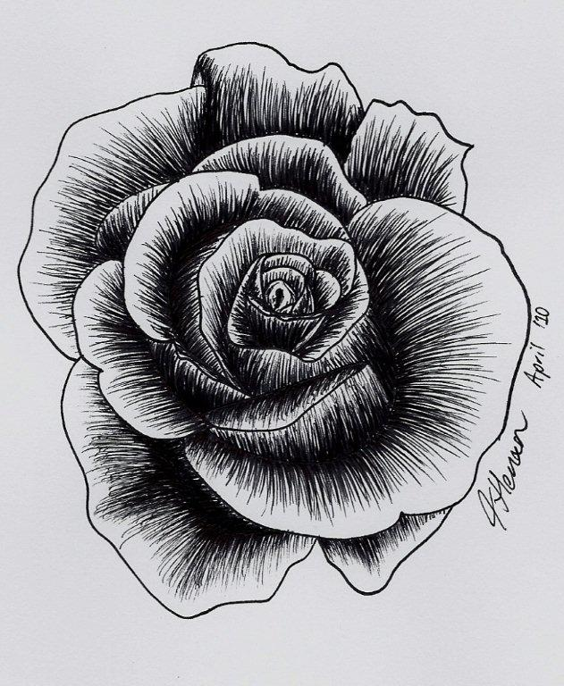 One of many roses drawn... by aramat90 on DeviantArt
