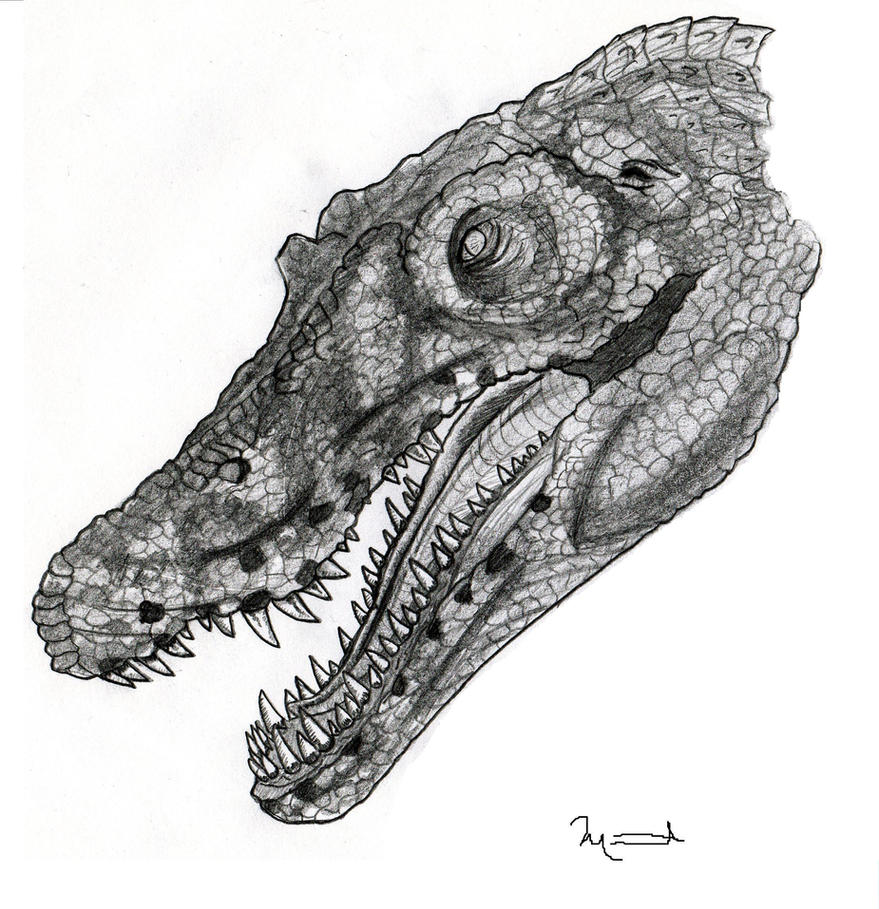Spinosaurus from Jurassic Park by yankeetrex on DeviantArt Spinosaurus Jurassic Park 3 Drawings