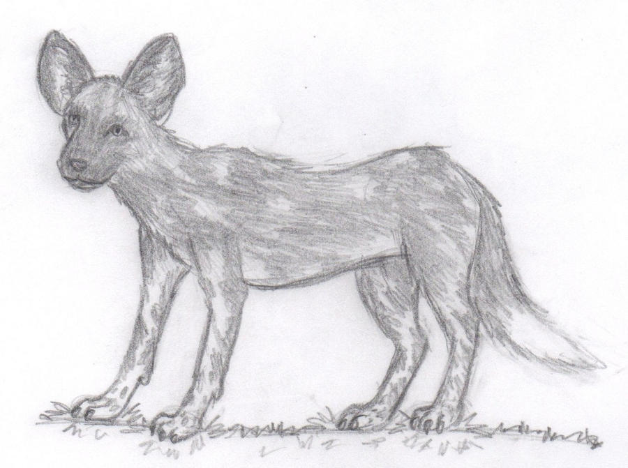 It is an image of Handy African Wild Dog Drawing