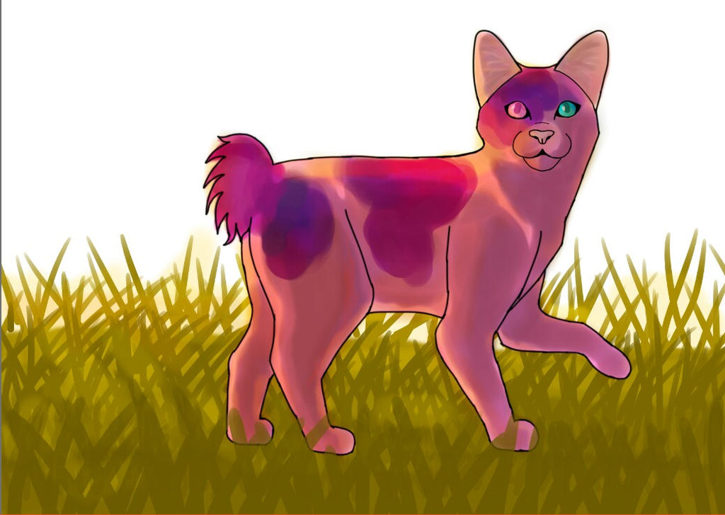 A pink cat by Muuluzi
