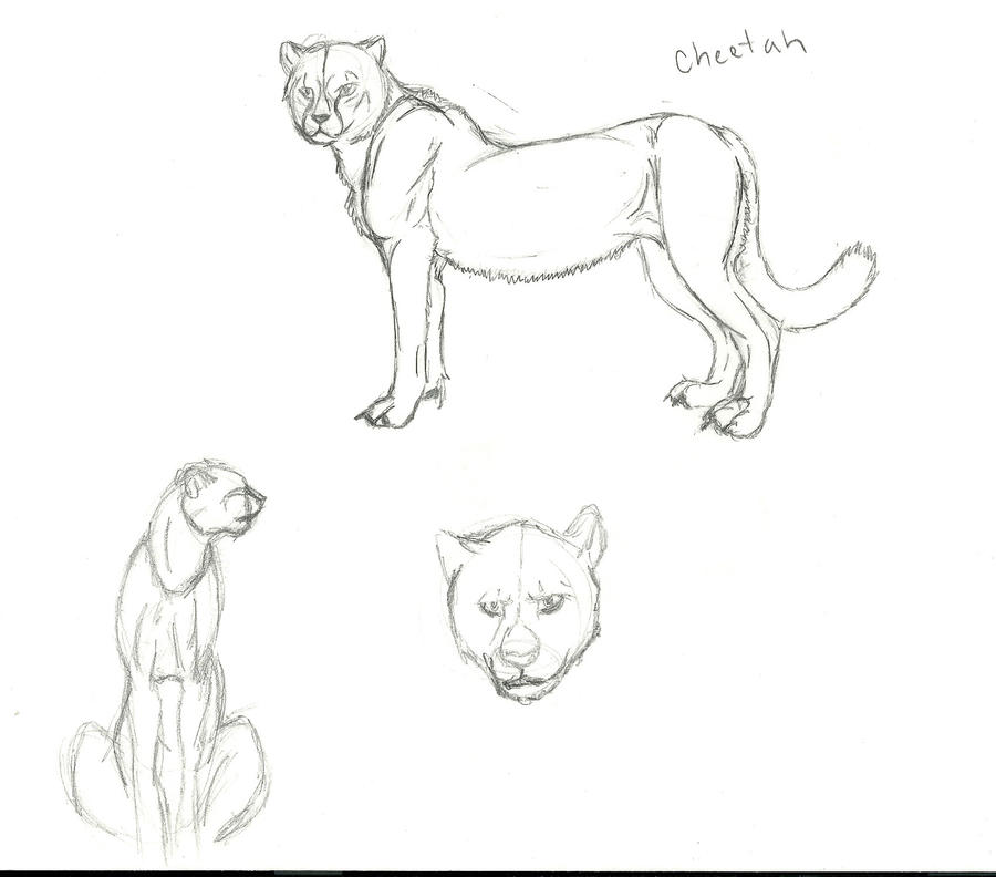 Cheetah anatomy practice by RiverShaman on DeviantArt