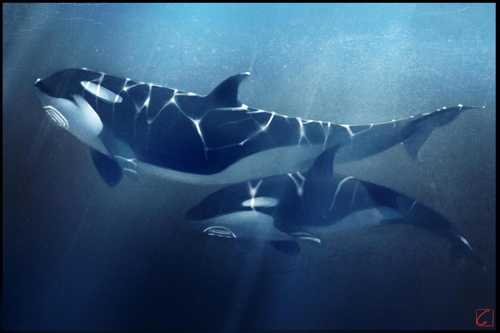 megalodon shark vs great white shark