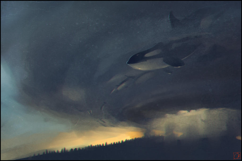whales killers by GaudiBuendia