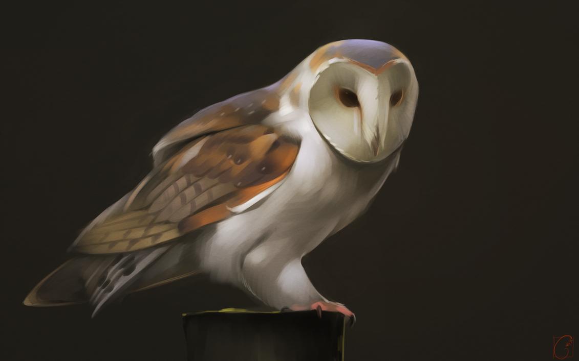barn owl by gaudibuendia on deviantart