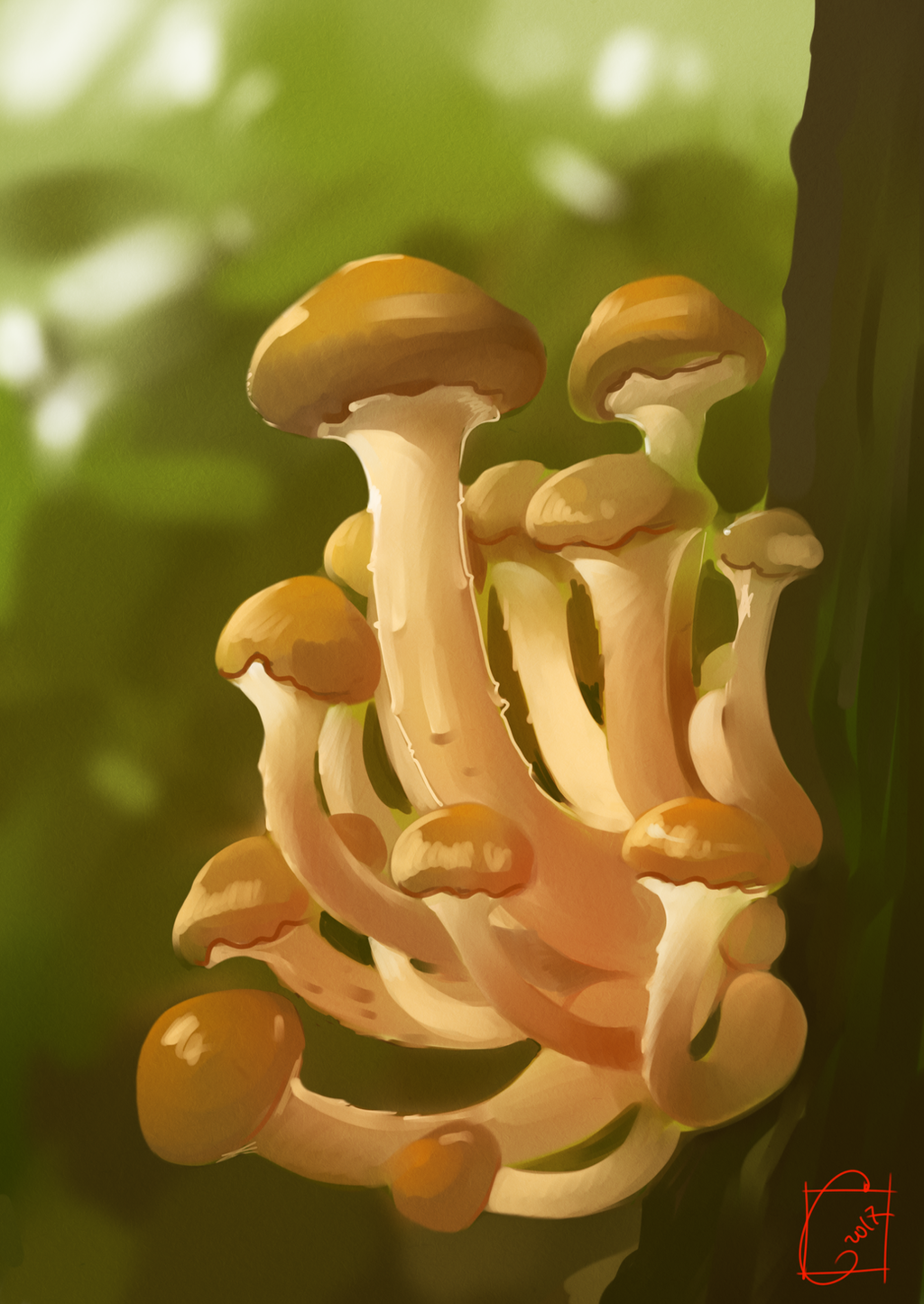 mushrooms by GaudiBuendia