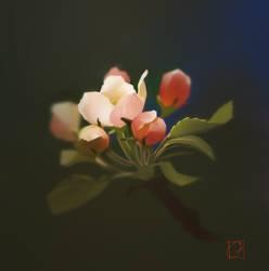Apple flowers by GaudiBuendia
