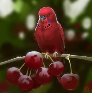 cherry parrot
