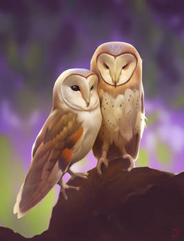 owl's love